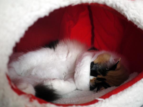 ICHIGO寝