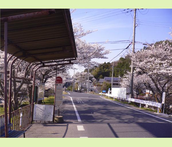 桜舞い散るなんちゃらかんちゃら~♪