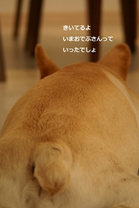 ナンバー14 クウ太くん1