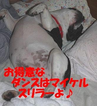 ナンバー24 ぽんずちゃん2