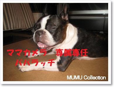 ナンバー27 MUMUちゃん2
