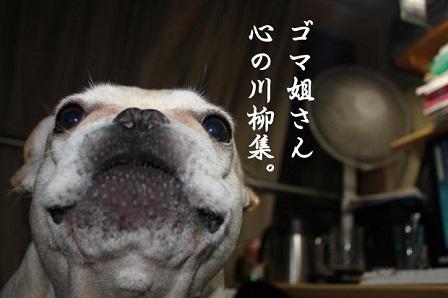 ナンバー41 ごまちゃん1 1