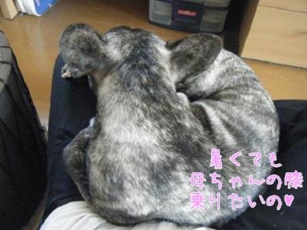 ナンバー45 心桜ちゃん