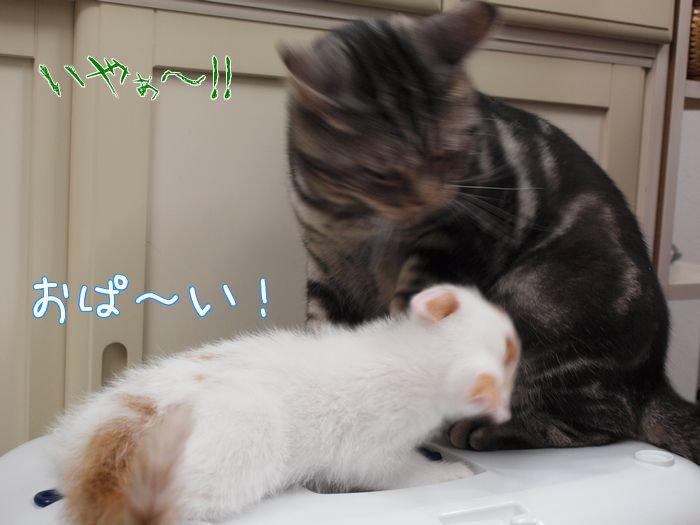 ameshogakomori20110522 (5)