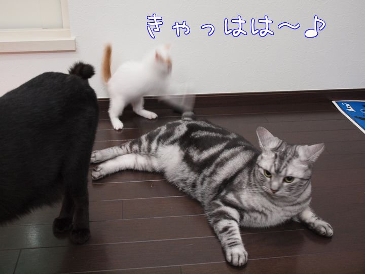 wendytokainakayosi20110525 (5)