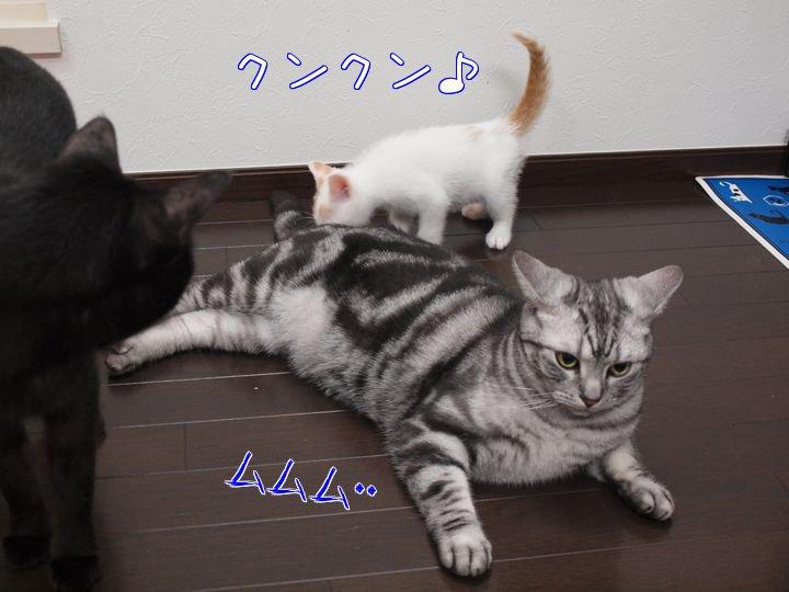 wendytokainakayosi20110525 (3)