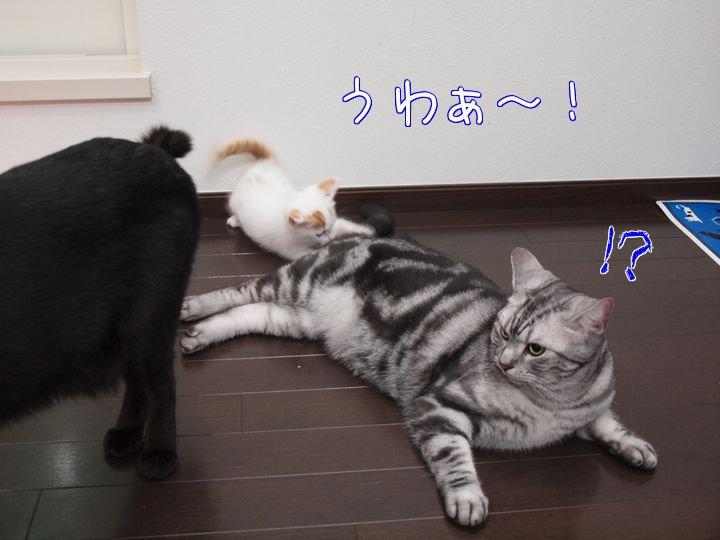 wendytokainakayosi20110525 (4)