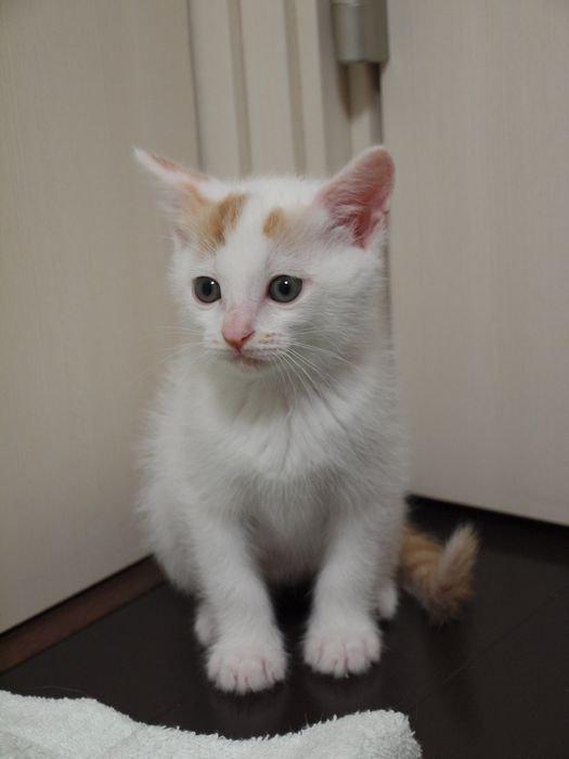 kawaiikai20110526 (4)