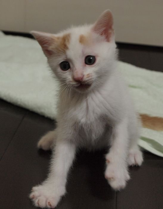 kawaiikai20110526 (5)