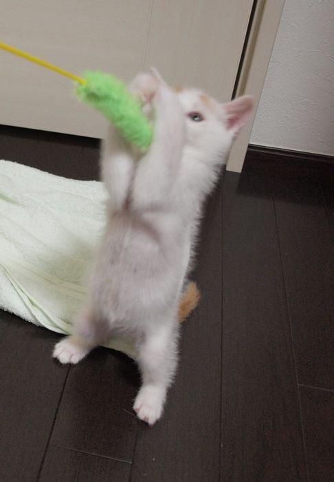 kawaiikai20110526 (3)
