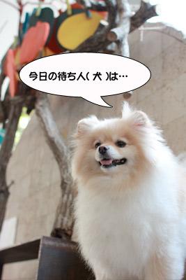 917_1_20100921133844.jpg