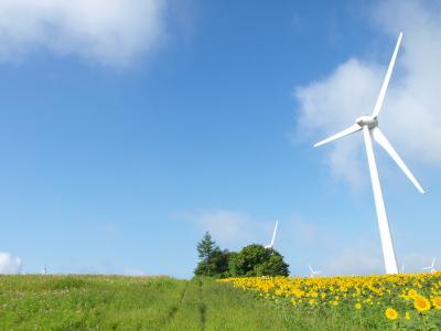 ひまわり畑と風車とコスモス畑@郡山布引風の高原