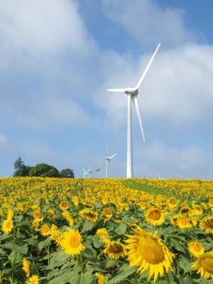 ひまわり畑と風車@郡山布引風の高原