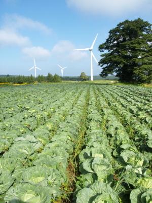 キャベツ畑と風車@郡山布引風の高原