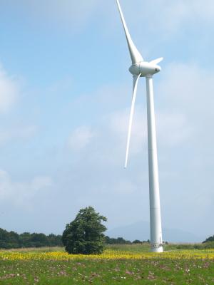 ひまわり畑とコスモス畑と風車@郡山布引風の高原