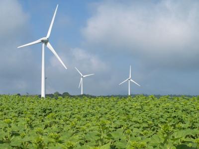緑のひまわり畑@郡山布引風の高原