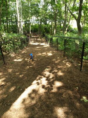 湖畔のドッグウォーク@レジーナの森