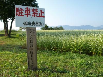 高杖原の蕎麦畑_2010/09/01