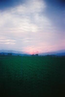 蕎麦畑と夕景@白鳥浜