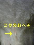 DVC00229.jpg