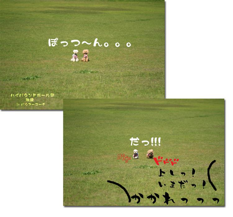 11_20100604103143.jpg