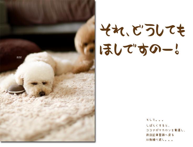 11_20100714105015.jpg