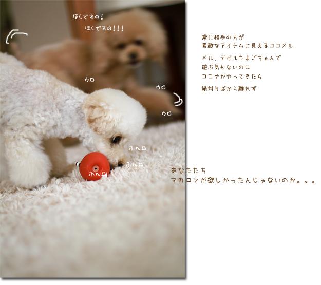 1_20100714100512.jpg