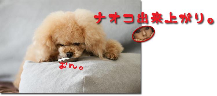 8_20100713102415.jpg