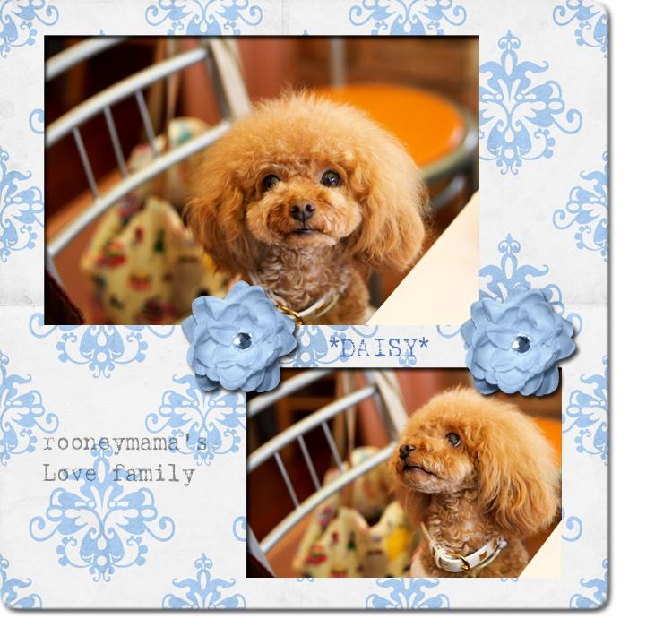 daisy_20100620123351.jpg