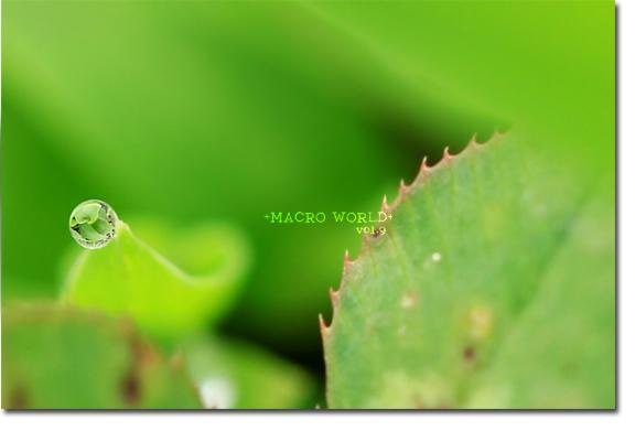 water-drop_20100704130315.jpg
