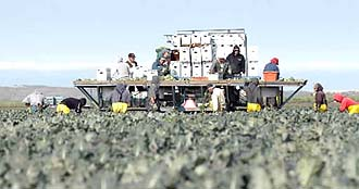 メキシコ人の労働力がカリフォルニアの農業を支える