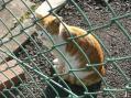 cat24 (3)