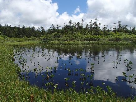 秘密の湿原