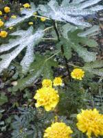 20101027初雪0