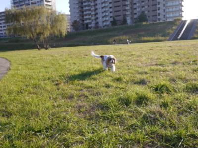 blogP1130897.jpg