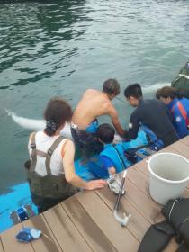 イルカ全員3