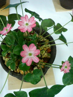 20090322_flower1.jpg