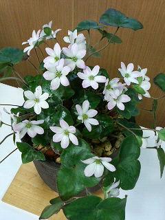 20090322_flower3.jpg