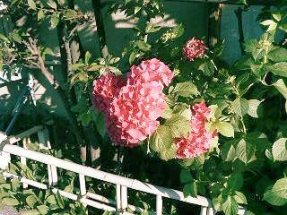 20090611_flower.jpg