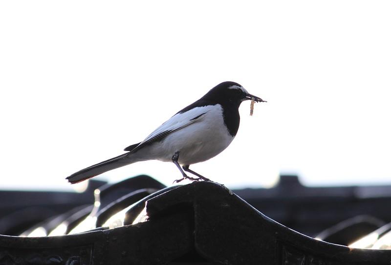 20100426_bird.jpg