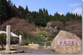 20120424_garyusakura.jpg