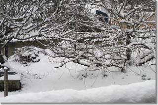 20130110_snow.jpg