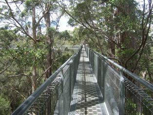 treetopwalk2.jpg