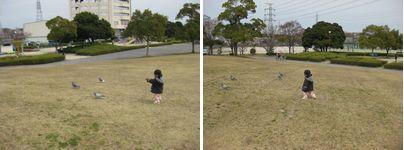 落合公園 鳩