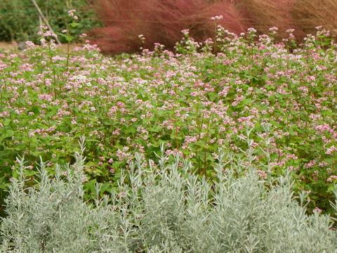 花の農園 036