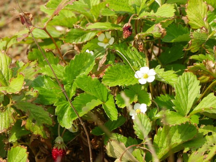 花の農園 042