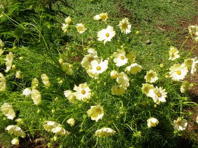 花の農園 030