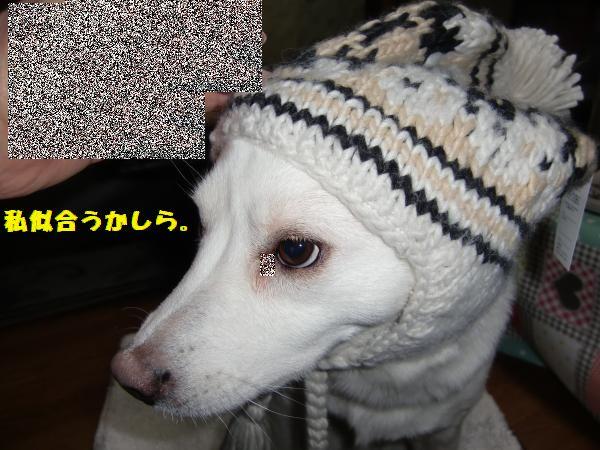 CIMG9001_convert_20130125232554.jpg