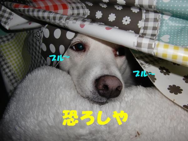 CIMG9177_convert_20130224201949.jpg