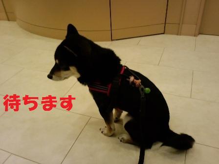 blog6318.jpg